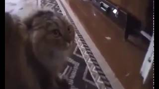 Вызов ветеринара на дом Москва(, 2017-02-03T21:43:13.000Z)