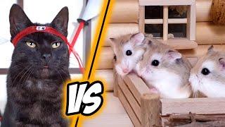NINJA ROBOTS attack HAMSTERS  MAJOR HAMSTER vs SAMURAI CAT (1/3)