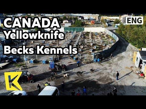 【k】canada-travel-yellowknife[캐나다-여행-옐로나이프]개-썰매-농장-벡스-켄넬/beck's-kennels/dog-sled/siberian-husky/farm