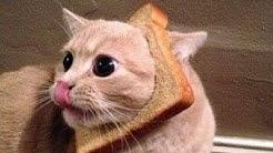 Vous aurez des larmes dans vos yeux de rire - La compilation FUNNIEST Cats