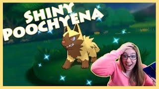 dexnav shiny hunting poochyena pokemon alpha sapphire twitch highlight