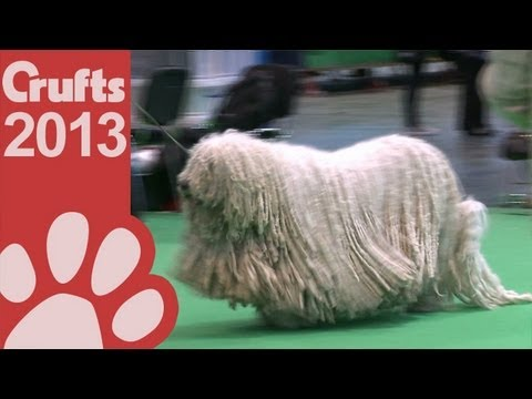 Komondor - Best of Breed - Crufts 2013