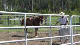 Shiloh - Quarter Horse - Gelding