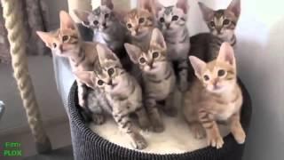 Смешные видео про животных 2  Интересное видео!