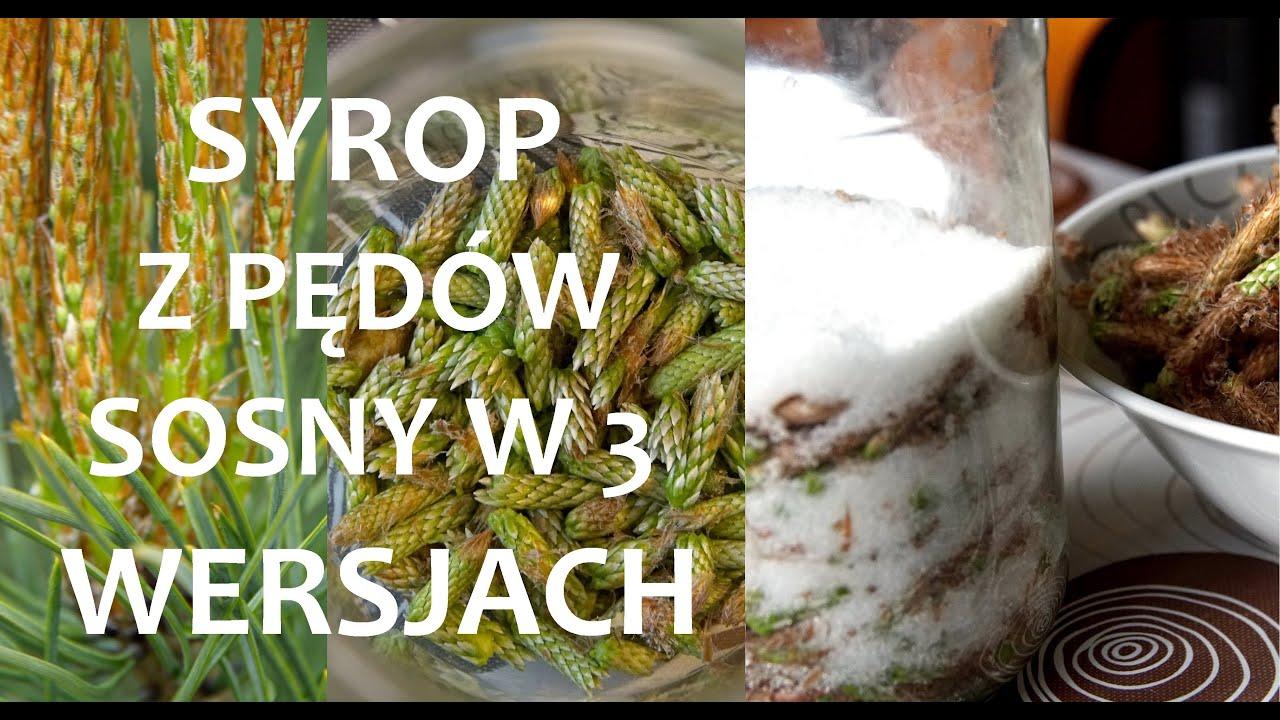 Syrop z pędów sosny - przepis w 3 wersjach (Małe, duże, obrane) ZŻ84