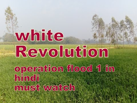 white revolution India's white revolution: operation flood, food aid and development (library of development studies) [bruce a scholten] on amazoncom free shipping on qualifying offers as millions continue to face a future of food poverty, lessons can be learned by considering how farmer cooperatives succeeded in improving india's food security.