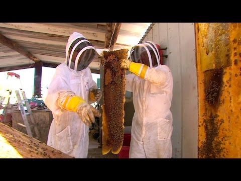 Risk Takers - 112 - Killer Bee Removal Expert | FULL LENGTH | MagellanTV