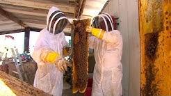 Risk Takers - 112 - Killer Bee Removal Expert | FULL LENGTH | MagellanTV