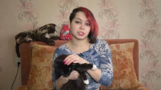 1 марта -День кошек