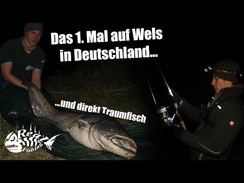 Was für ein Fisch!! Auf WALLER an der BUHNE im Fluss // Erklärung & Profitipps von Wallersafari