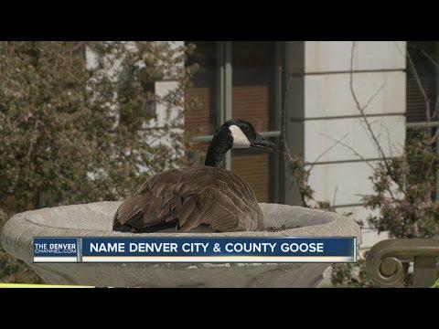 Name the Denver City & County building goose