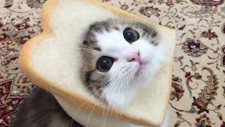 Faze comice cu pisici haioase pisicute amuzante