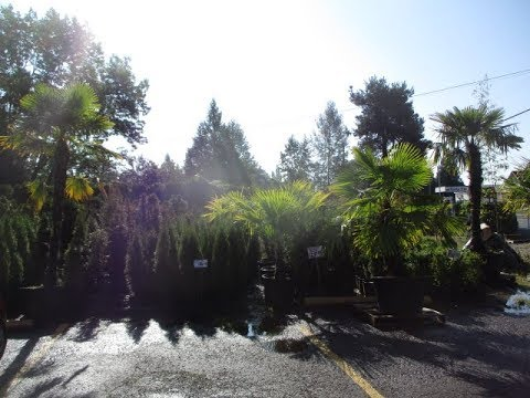Palm & Exotic Plant Nursery Near Vancouver