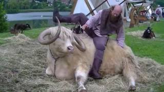 Médiev'Arques 2016 à Arques la bataille grosse bébête à cornes ....