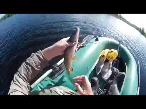 ловля щуки май 2016 видео