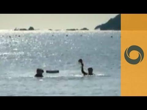 The famous ama female divers - Toba, Japan
