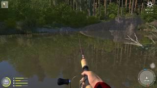 Російська рибалка 4 - річка Берізка - Качаємо спінінг на вращалках