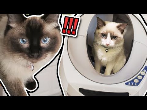 My Cats React to $600 Robot Litter Tray