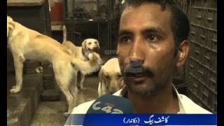 City Pet Animals Selling Pkg By Aimen Tahir City42