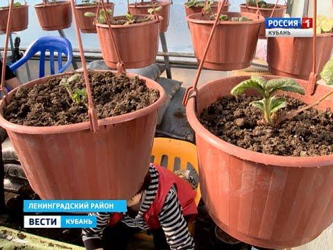 Кубанские селекционеры готовят саженцы к продаже