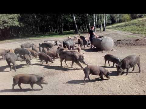 Zatyki Gołdap Safari