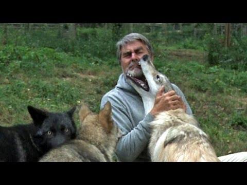 Wie Groß Werden Wölfe