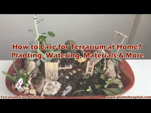 How to Care for Terrarium at Home? Planting, Watering, Materials & More