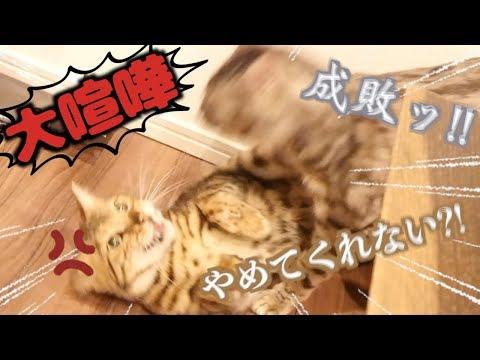 野生化?!飼い主のとある声で本能覚醒する猫たち