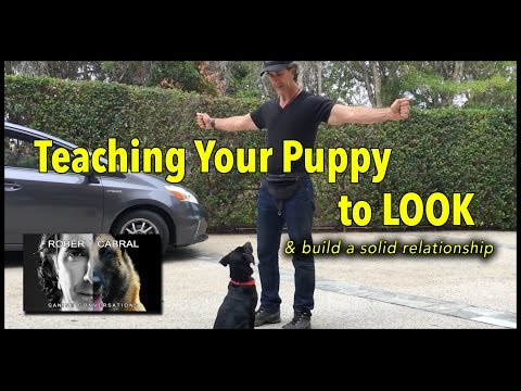 Puppy Training - The Light Switch Game, Getting Your Puppy to Look - Dog Training Video