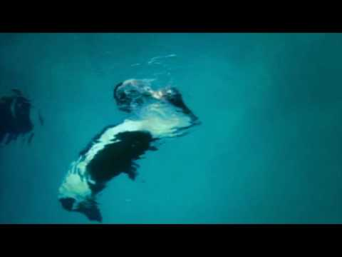 Blackfish Movie Clip - Kasatka And Ken Peters