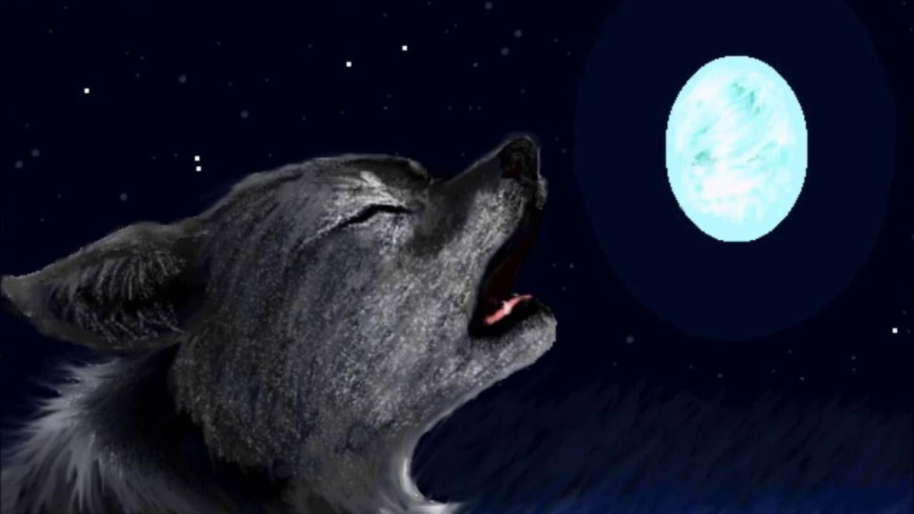 Animal jam Drawing-Howling Wolf - YouTube  Howling Wolf Animal Jam Cake