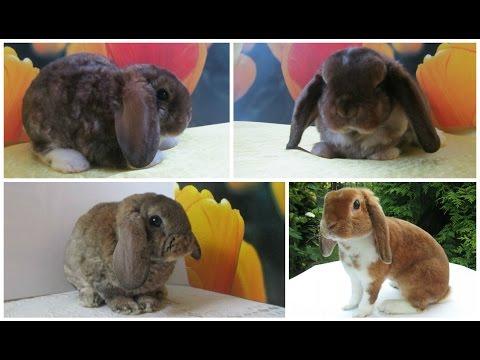 Сколько лет живут кролики разных пород в домашних условиях