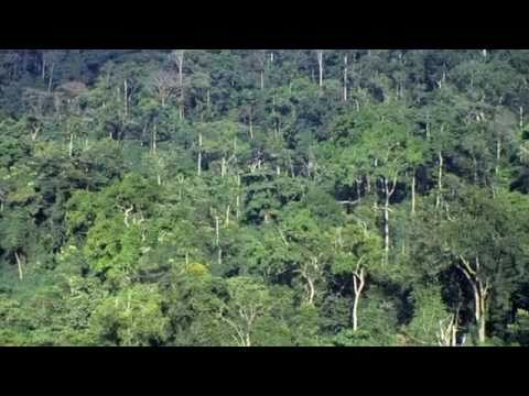 Leaders must make brave choices to save world´s forests