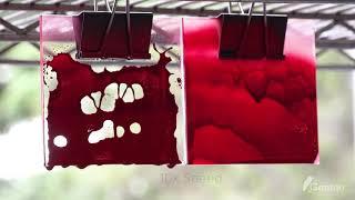 Gentoo  Coating vs Spray Paint