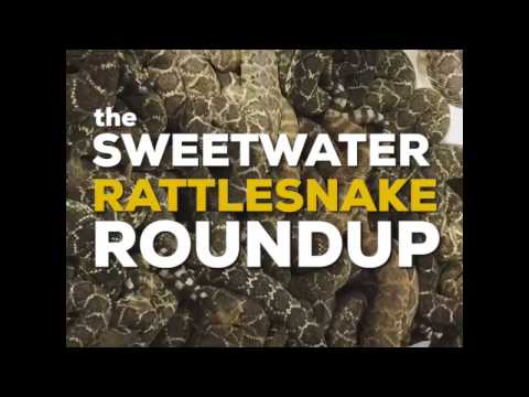 Rattlesnake Roundup in Sweetwater, Texas