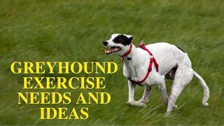 Greyhound Exercise [Needs and Ideas]