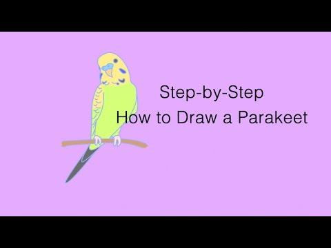 how to draw a parakeet youtube