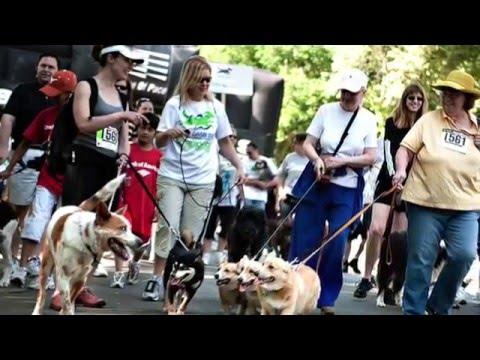Register For Doggy Dash 2016!