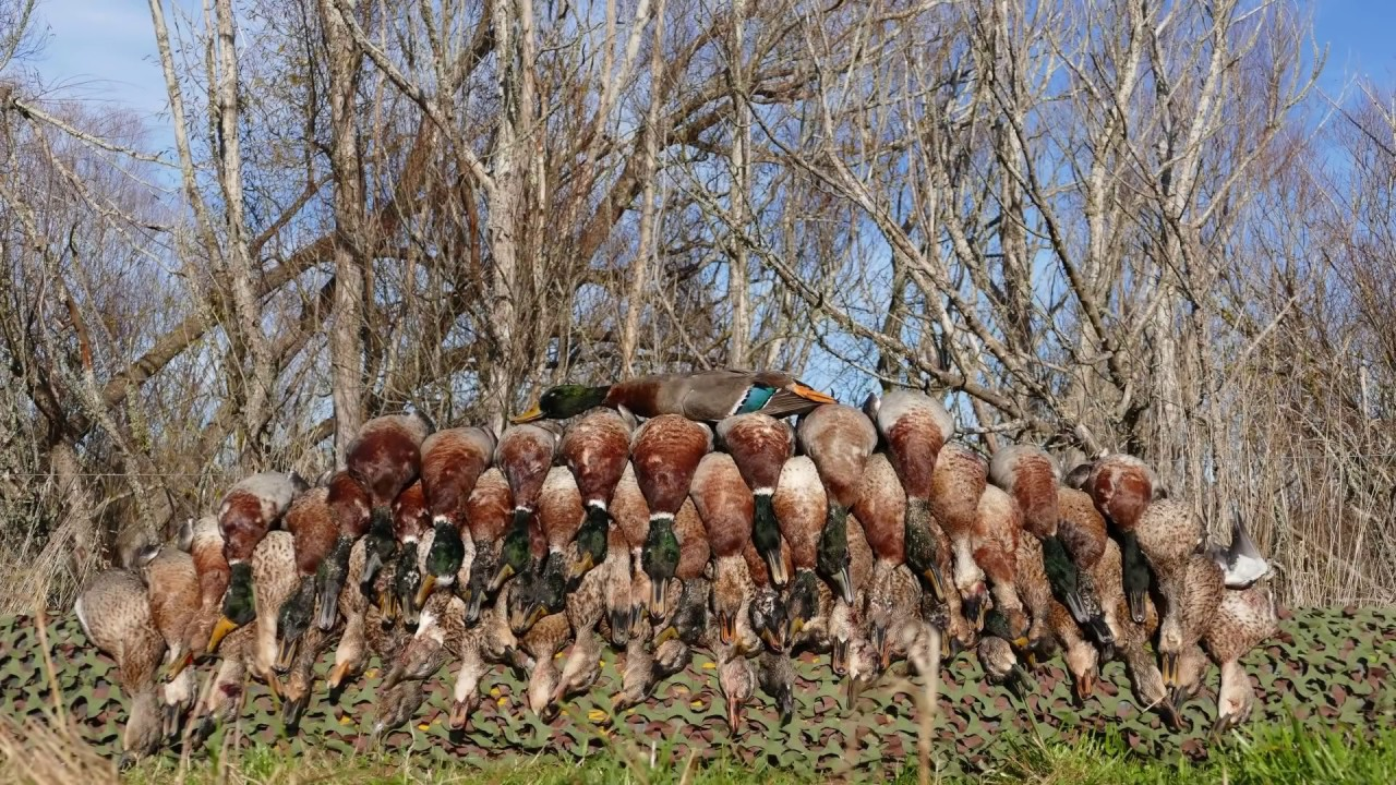 duck hunting in nd essay If duck hunting is your passion, our duck hunting is second to none these guided hunts take place in our endless fields and over small bodies of water.