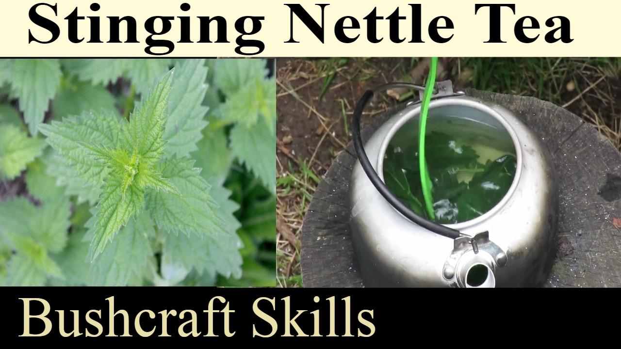 How To Make Stinging Nettle Tea - High