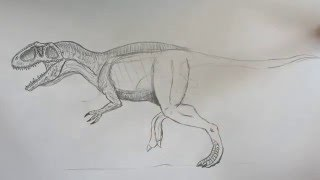 How to draw Giganotosaursus  part 1.