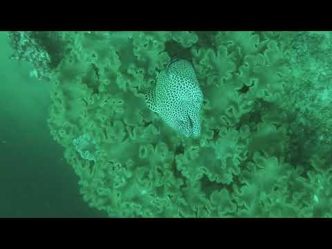 Police Run & The Noodle - Dimaniyat Islands, Oman Diving