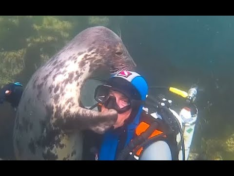 Seal Can't Stop Hugging This Diver