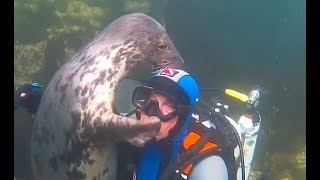 Seal Can\'t Stop Hugging This Diver