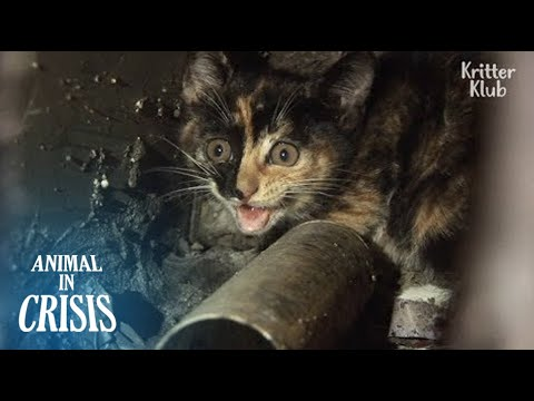 'Save My Baby Who Fell Into A 10m-long Pipe' Mom Cat Cries Out For Help | Animal in Crisis EP114