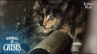 """Save My Baby Who Fell Into A 10m-long Pipe"" Mom Cat Cries Out For Help 