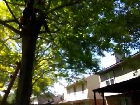 Tree jumping with cole dane and evan 2