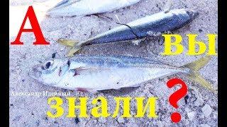 Как ловить рыбу на Черном море с берега