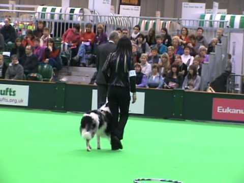 Claire Porter & Ob. Ch. Rockin' Indy Go  Crufts Dog Obedience Championships 2012