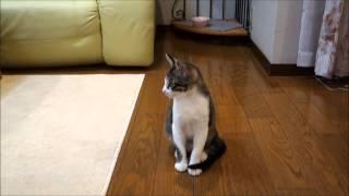 Кошка и собака в одном доме(Кошка и собака в одном доме Кошка и собака в одном доме - руководство по приучению Если кошка и собака в одно..., 2014-09-05T09:42:48.000Z)